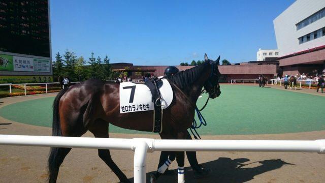 【競馬】パドックの風景