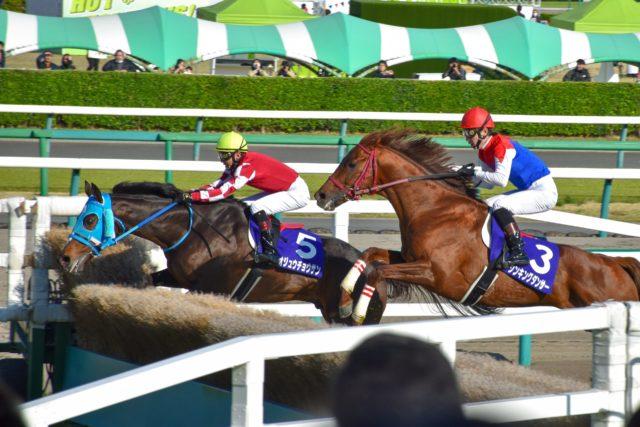 【競馬】障害物を越える馬たち