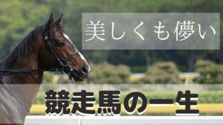 【競馬】美しも儚い競走馬の一生(馬券の真実)