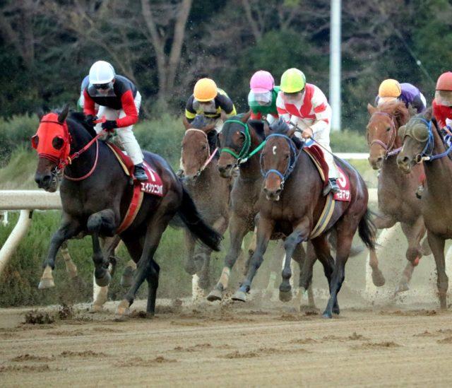 園田競馬でのレース
